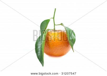 Orenge And Leaf