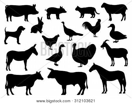 Set Of Silhouettes Of Domestic Farm Animals. Vector Illustration Livestock Isolated On White, Side V