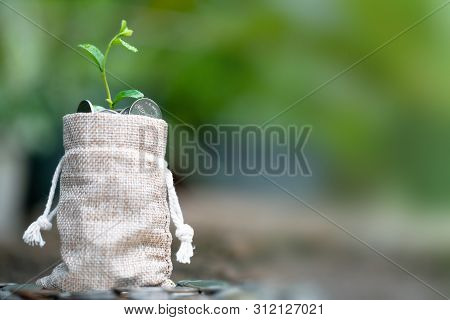 Coins in sack and small plant tree. Pension fund, 401K, Passive income. savings and making money. Investment and retirement. Business investment growth concept. Risk management. poster