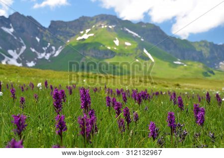 Alpine meadow in Melchsee-Frutt, Switzerland