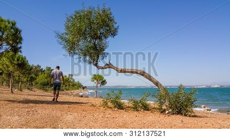 Single Man In Shorts And T-shirt Walking On An Unimproved Road With Trees Near The Sea On A Windy Su