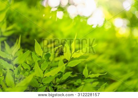 Closeup Selective Focus Of Beautiful Green Leaves On Blurred Greenery Background In Garden With Copy