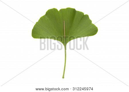An Single Acupuncture Needle On A Green Ginkgo Biloba Leaf, Isolated On White Background