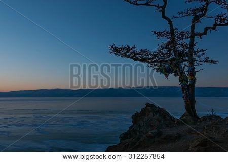 Close-up Of Shaman Tree On Cape Burkhan, Olkhon Island And Background Of Frozen Lake Baikal Under Su
