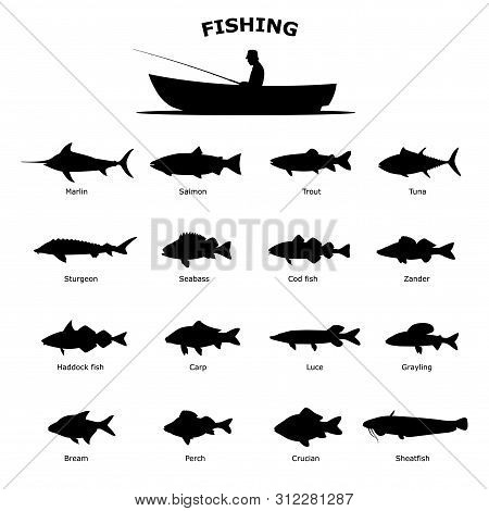 Set Of Black Silhouette Of Sea River Fish. Vector Illustration Isolated On White Background. Fish Ic