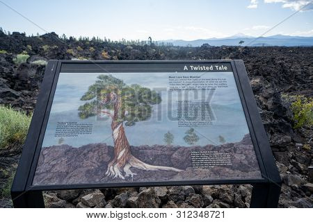 Bend, Oregon - July 8 2019: Interpretive Sign Explaning Details Of The Famous Lava Ness Monster Tree