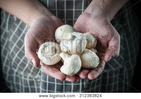 Champignons In The Hands Of Stained Earth