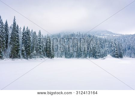 Coniferous Forest On Snow Covered Lake. Beautiful Nature Scenery On A Cloudy Day In Winter. Trees In