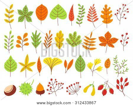 Colorful Autumn Leaves. Autumnal Yellow Leaf, Forest Nature Orange Leafage And September Red Leaves.