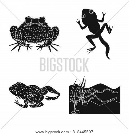 poster of Isolated object of fauna and reptile logo. Collection of fauna and anuran bitmap icon for stock.