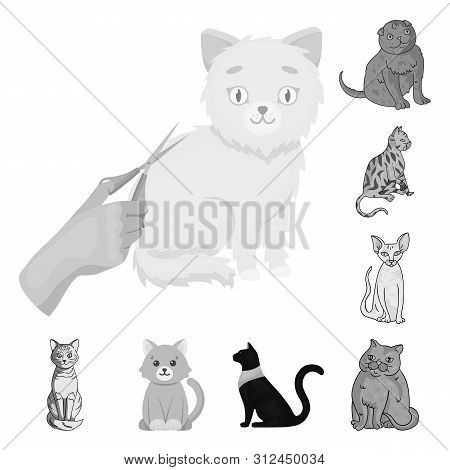 Isolated Object Of Pet And Sphynx Icon. Collection Of Pet And Fun Stock Bitmap Illustration.