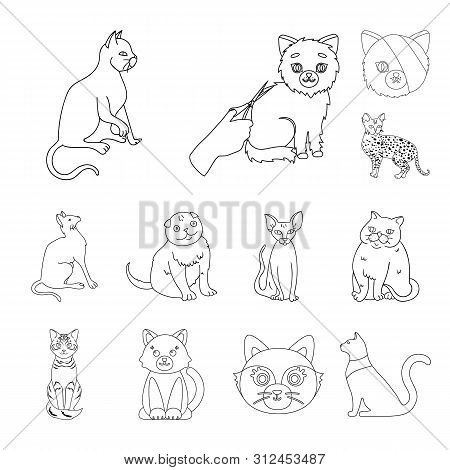 Bitmap Illustration Of Pet And Sphynx Icon. Collection Of Pet And Fun Bitmap Icon For Stock.