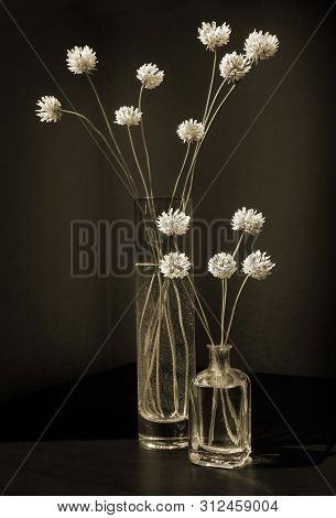 White Or Dutch Clover Flowers In Two Vintage Glass Vases Against A Low Key Background. Still Life In