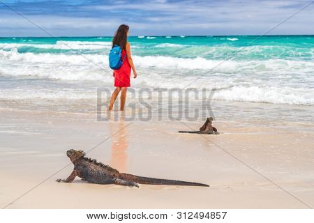 Galapagos Islands wildlife and ecotourism adventure tourist and marine iguana walking on Tortuga Bay beach in Santa Cruz island. Woman in background. Galapagos islands travel vacation. poster