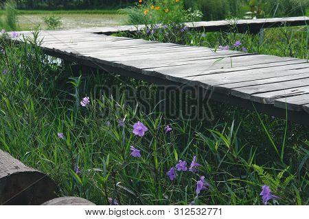 Wooden Bridge Footbridge Walkway Pathway Along Flower Field