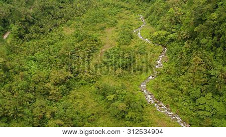 River In The Rainforest Through The Green Jungle Covered With Green Forest And Palm Trees Aerial Vie