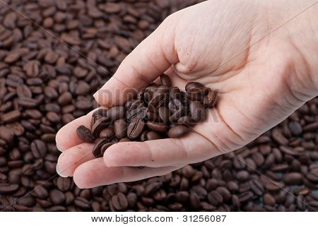 Woman Hand Holding Coffee Grains.