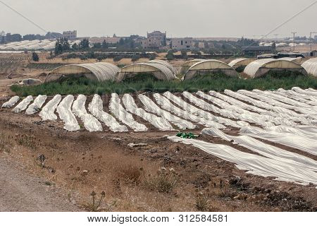 Agricultural Greenhouses Plastics In Amman In Jordan