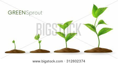 Realistic Sprouts 3d.phases Plant Growing.evolution Concept. Seeds Sprout In Ground. Sprout, Plant,