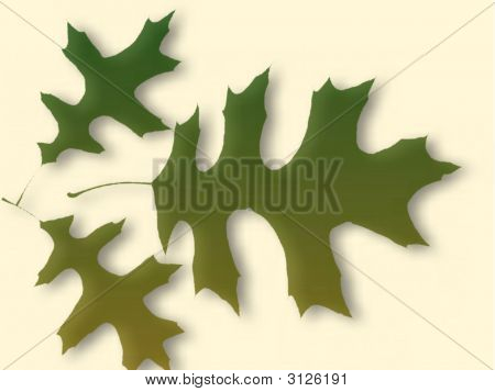 Autumn Leaves On Colored Background