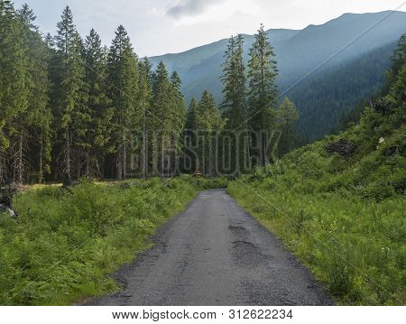 Footpath Asphalt Road From Ziarska Dolina, Beautiful Nature With Lush Green Grass, Spruce Trees And