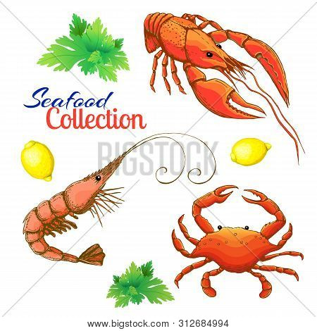 Decorative Seafood Set. Realistic Sketched Prawn Or Shrimp, Lobster, Crayfish And Crab With Lemon An