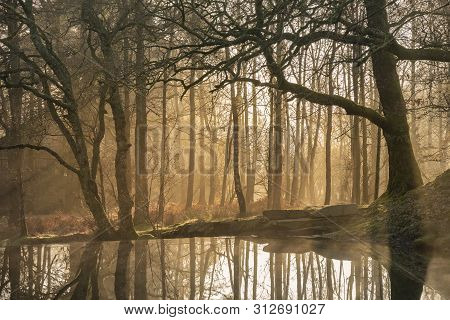 Stunning Landscape Image Of Still Stream In Lake District Forest With Beautiful Sun Beams And Glow B
