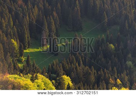 Trees And Meadows Illuminated By Afternoon Light