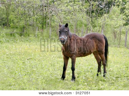 a brown horse in a green field of grass and trees poster