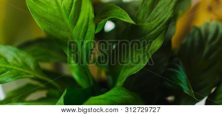 Colorful Green Leaves Close Up. Tropical Nature, Green Leaf In The Garden, Green Concept, Rainforest