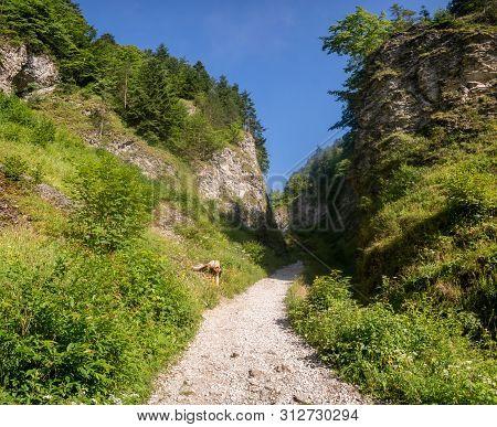 Hiking Trail In The Mountains Leading Through The Gorge -the Szopczański Gorge (przełęcz Szopka),pie