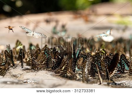 Flocks Of Butterflies Live In The Forest, Soft Focus Image