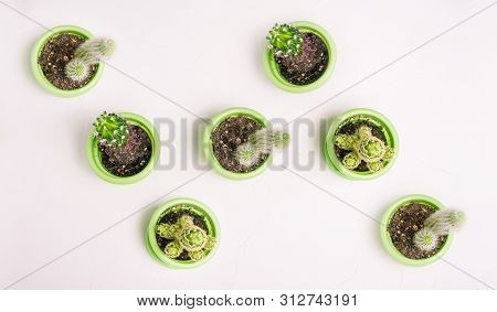 Cacti Of Different Types Stand Chaotically In Green Pots On A White Background. Houseplants To Creat