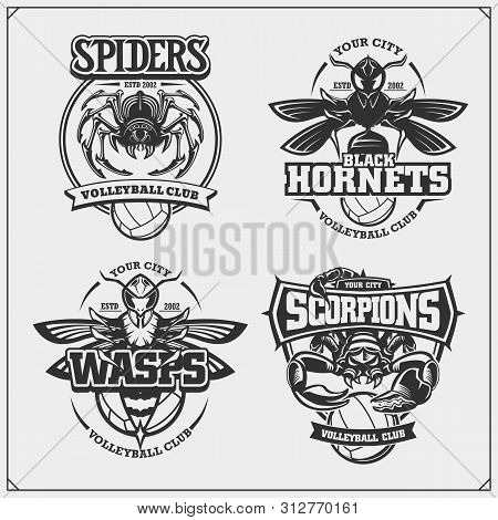 Volleyball Badges, Labels And Design Elements. Sport Club Emblems With Scorpion, Wasp, Hornet And Sp