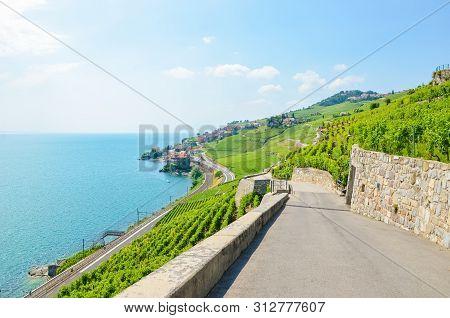 Terraced Vineyards In Lavaux Wine Region, Switzerland. Green Vineyard On Slopes By Lake Geneva. Swis