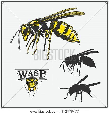 Wasp2.eps
