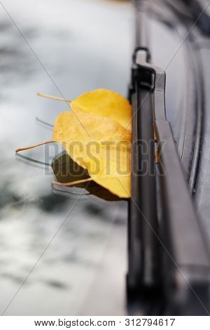 Daylight. Almost Autumn. Yellow Leaves Attacked The Windshield. There Is Also A Janitor
