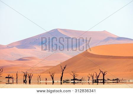 Mirage at Deadvlei Namibia where dried out camelthorn trees surrounded by red sand dunes