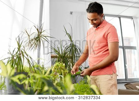 people, nature and plants concept - indian man taking care of houseplants at home