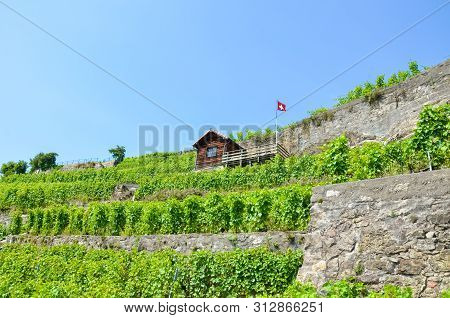 Magnificent Terraced Vineyards On Slopes By Lake Geneva In Famous Lavaux Wine Region, Switzerland. G