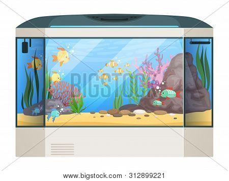 Big Aquarium. Fishes And Water Plants In Glass Aquarium Tank Underwater Life Vector Cartoon Illustra