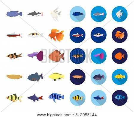 Different Types Of Fish Cartoon, Flat Icons In Set Collection For Design. Marine And Aquarium Fish B