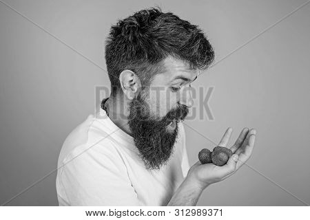 Hipster Bearded Holds Strawberries On Palm. Man Shouting Hungry Greedy Face With Beard Eats Strawber