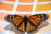 Butterfly on a bright background colour insect poster