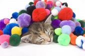 A kitten - covered in decorative colorful balls takes a nap on a white background. One in a series poster