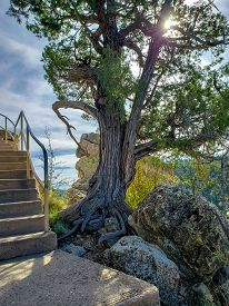 Tree Growing Out Of The Rocks At Walnut Canyon National Monument In Flagstaff Arizona