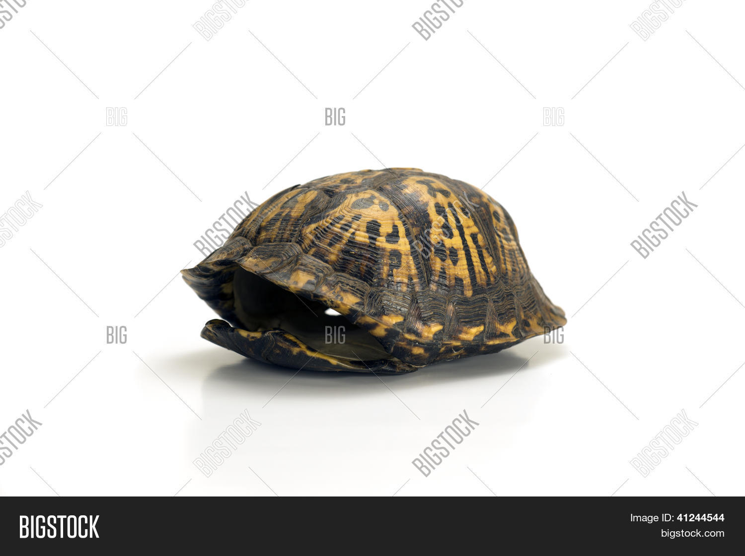 Empty Turtle Shell Image & Photo (Free Trial) | Bigstock