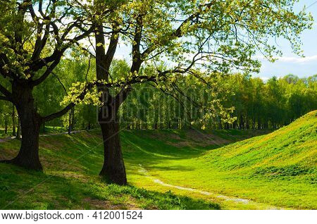 Woods landscape, woods trees in sunlight. Spring woods landscape in May, sunny day in the spring city park, green woods spring trees lit by bright sunlight, woods background