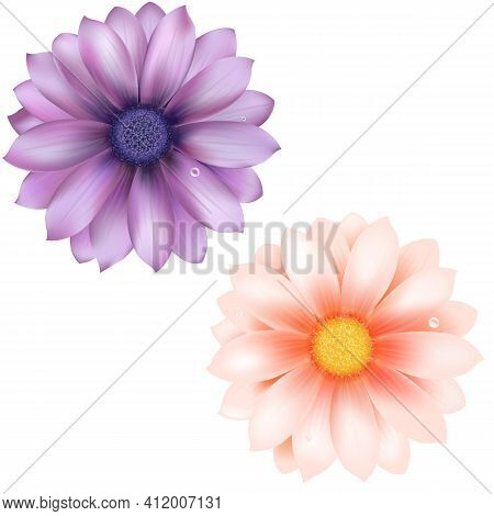 2 Gerber, Isolated On White Background, Vector Illustration.