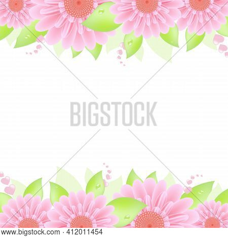 Pink Gerbers, Isolated On White Background, Vector Illustration
